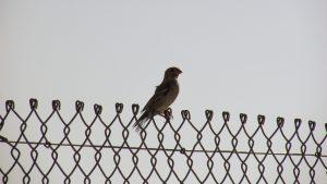 bird-1748678_1920